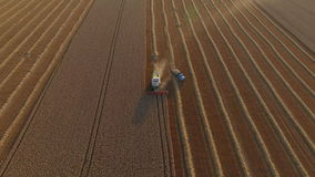 Combaine harvester unload wheat top view. Combaine harvester threshing wheat harvester unload wheat top view stock footage