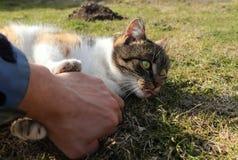 Combat avec le chat domestique furieux dans le jardin Catus de main et de felis Jeu occasionnel avec moggy vif Attaque sur moi pa photos libres de droits