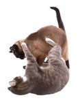 Combat de chats Photos stock