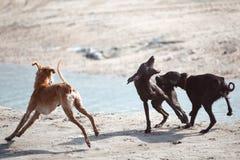 Combat de chien Photos libres de droits