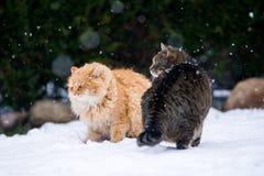 Combat de deux chats Photographie stock libre de droits