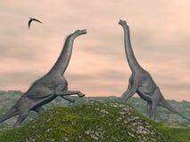 Combat de dinosaures de Brachiosaurus - 3D rendent Photos libres de droits