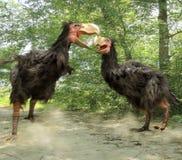 Combat de Gastornis (oiseaux de terreur) Image stock