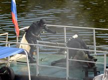 Combat swimmers work out the capture of a terrorist at the stern of a river vessel. stock photo