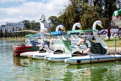 Combates de la paleta del cisne en la orilla del lago fotografía de archivo libre de regalías