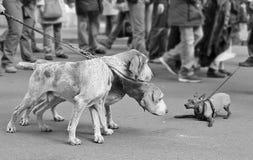 Combatiente de calle. Imagen de archivo libre de regalías