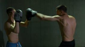 Combatientes kickboxing del varón que entrenan en estudio del boxeo con la concentración y la determinación metrajes