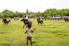 Combattant avec des lances des palmettes, festival de Pasola, Kodi, île de Sumba, Nusa Tenggara Image stock