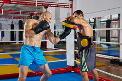 Combattenti di Kickbox che combattono nell'anello Fotografia Stock