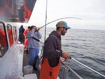 Combattimento del pesce serra Immagini Stock