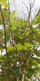 Combinação de Branch& vivo e inoperante x27; s na árvore fotografia de stock