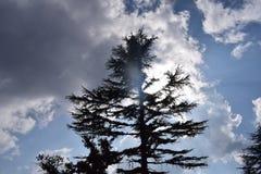 A combinação de nuvens, de árvore e de sol Imagens de Stock