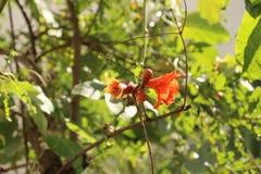 Combinação de um fruto e de uma flor fotos de stock royalty free