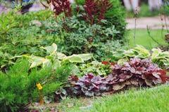 Combinação misturada dos perennials no jardim do verão fotos de stock