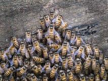 Combinación de abejas de trabajador Foto de archivo libre de regalías