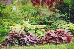 Combinación mezclada de los perennials en jardín del verano fotografía de archivo