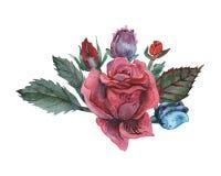 Combinaison avec du charme d'aquarelle peinte à la main des fleurs et des feuilles d'isolement sur le fond blanc Photo libre de droits