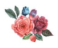 Combinaison avec du charme d'aquarelle peinte à la main des fleurs et des feuilles d'isolement sur le fond blanc Image libre de droits