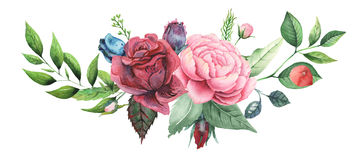 Combinaison avec du charme d'aquarelle peinte à la main des fleurs et des feuilles d'isolement sur le fond blanc Photographie stock