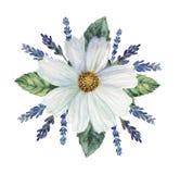 Combinaison avec du charme d'aquarelle peinte à la main des fleurs et des feuilles, d'isolement sur le fond blanc Images libres de droits