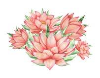 Combinaison avec du charme d'aquarelle peinte à la main des fleurs et des feuilles, d'isolement sur le fond blanc Image stock