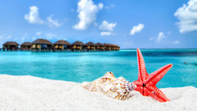 Combination of sandy, shell front with blurred tropical island Royalty Free Stock Image