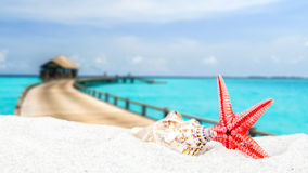 Combination of sandy and shell front with blurred tropical island Stock Image