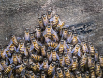 Combination of Worker Bees Royalty Free Stock Photo