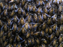 Combination of Worker Bees Royalty Free Stock Image