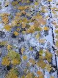 Combinato di estate, dell'autunno e dell'inverno immagini stock