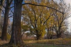 Combinazione armoniosa di alberi. Fotografie Stock Libere da Diritti