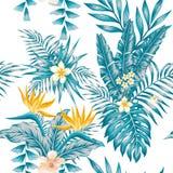 Combinazioni colori blu esotiche dei fiori e delle piante della composizione Immagine Stock Libera da Diritti