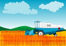 Combine. Blue combine is cutting wheat Stock Photo