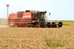 Combine. A combine harvesting grain in a field stock image