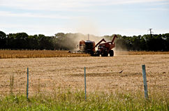Combine in action. Harvesting corn in a field of the Province of Buenos Aires, Argentina Royalty Free Stock Photo