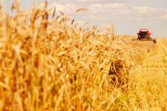 Combine che lavora ad un campo di frumento Fotografie Stock Libere da Diritti
