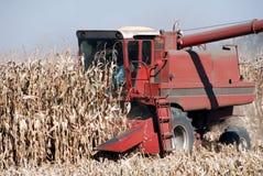Combine and Corn. Combine Harvesting Ripe Fall Corn Stock Photo