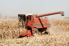 Combine and Corn. Red Combine Harvesting Ripe Corn Stock Photo