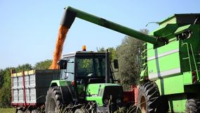A combine in a corn field Stock Photography