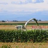 Combine in cornfield Stock Photo