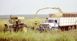 Combine cutting and loading. Farm worker using tractor and combine to cut and load truck Stock Image