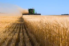 Combine cutting wheat Stock Photos