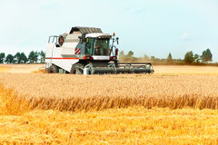 Combine cutting wheat on the field. Harvest time. Stock Photography