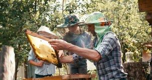 Combine el trabajo del apicultor feliz del padre que muestra los panales en el marco de madera por completo de abejas a sus dos p almacen de metraje de vídeo
