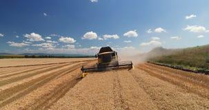 Combine el trabajo en el campo agrícola de la cosecha, opinión aérea del abejón almacen de metraje de vídeo
