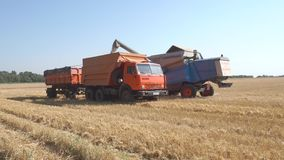 Combine grain pours into the truck-trailer. Agricultural machinery stock footage