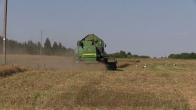 Combine harvest ripe wheat barley and stork birds in field. Combine harvest ripe wheat barley and stork birds in agriculture farm field on August 3, 2014 in stock video