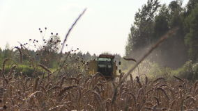 Combine harvest wheat grain agricultural field and ripe ears stock video footage