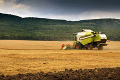 Combine Harvested Wheat Royalty Free Stock Photo