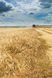Combine harvester in action on barley field harvesting. Stock Photos